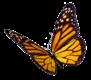 monarch signature